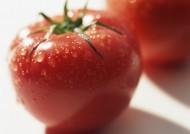鲜美西红柿图片_16张