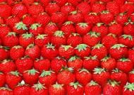 水果整齐排列背景图片_17张