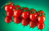 亦果亦蔬西红柿图片_12张