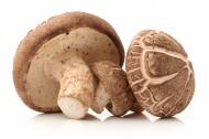 新鲜的蘑菇图片_10张