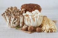 新鲜的蘑菇图片_9张