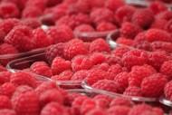 新鲜的树莓图片_10张