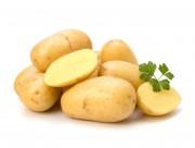 新鲜的土豆图片_14张