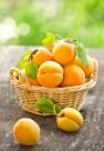 新鲜的杏子图片_9张