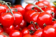 新鲜的番茄图片_15张
