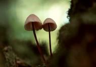 野生蘑菇图片_11张