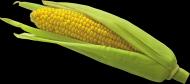 玉米透明背景PNG图片_15张
