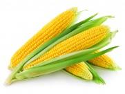 玉米图片_9张