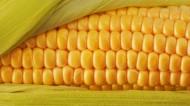 玉米圖片_9張