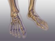 人體骨骼圖片_41張