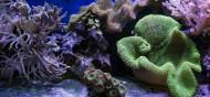 海底的珊瑚礁图片_6张