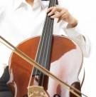 大年夜提琴图片_7张