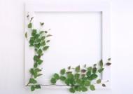 白色画框和绿树叶图片_6张