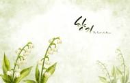 純潔白色韓國花朵背景圖片_6張