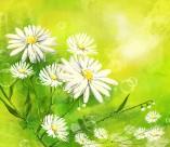 綠色韓國花朵背景圖片_6張