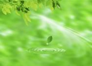 綠葉和晶瑩水滴圖片_19張