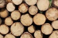 整齐堆放的木头切面纹理图片_11张
