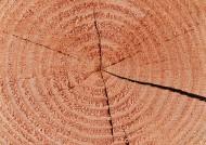 树木粗糙纹理图片_14张