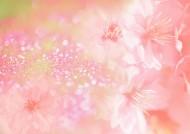 鲜花季节之春图片_35张