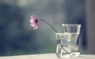 清新的玻璃瓶与花图片_11张