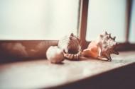 好看的贝壳图片_14张