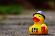 黃色塑料的玩具鴨圖片_15張