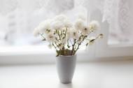 插花的花瓶图片_10张