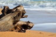 海滩上的漂流木图片_8张