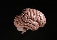 人大脑模型图片_4张