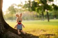 砂糖兔公仔圖片_5張