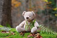 可爱的玩具小熊图片_11张