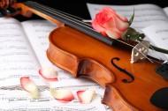 优雅的小提琴图片_22张