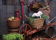 園藝工具圖片_35張