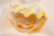 珍珠首飾圖片_38張