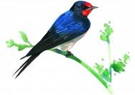 彩绘各种鸟类图片_19张