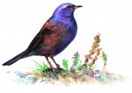 各种彩绘鸟类图片_16张