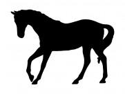 马的剪影图片_10张