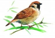 樹枝上的小鳥彩繪圖片_15張