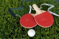 乒乓球和乒乓球拍图片_13张