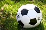 草地上的足球图片_12张