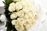 白玫瑰图片_40张