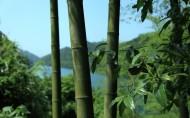 清脆的竹子圖片_10張