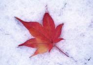 冰雪和植物图片_19张