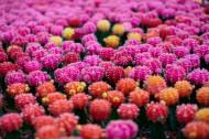 彩色的仙人掌图片_10张