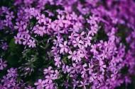 大自然中花草树木的特写图片_10张