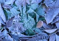 冬季树叶背景图片_5张