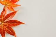秋天红色枫叶图片_15张