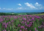 粉色花丛图片_31张