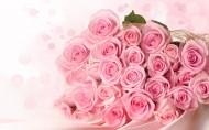 粉色玫瑰圖片_8張