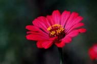 孤独的鲜花图片_9张